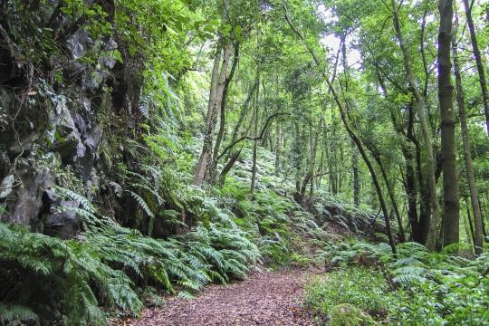 La Palma: Biosphärenreservat Los Tilos