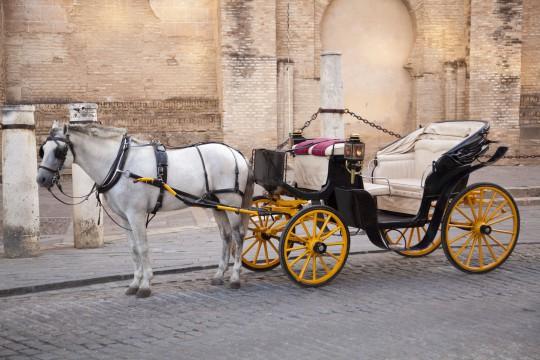 Sevilla: Pferd mit Wagen