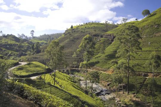 Sri Lanka: Tea Garden Berge