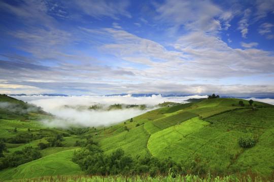 Nordthailand: Reisfelder